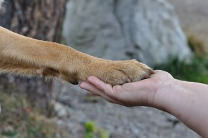 human hand holding paw