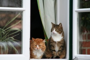 cats in window looking out