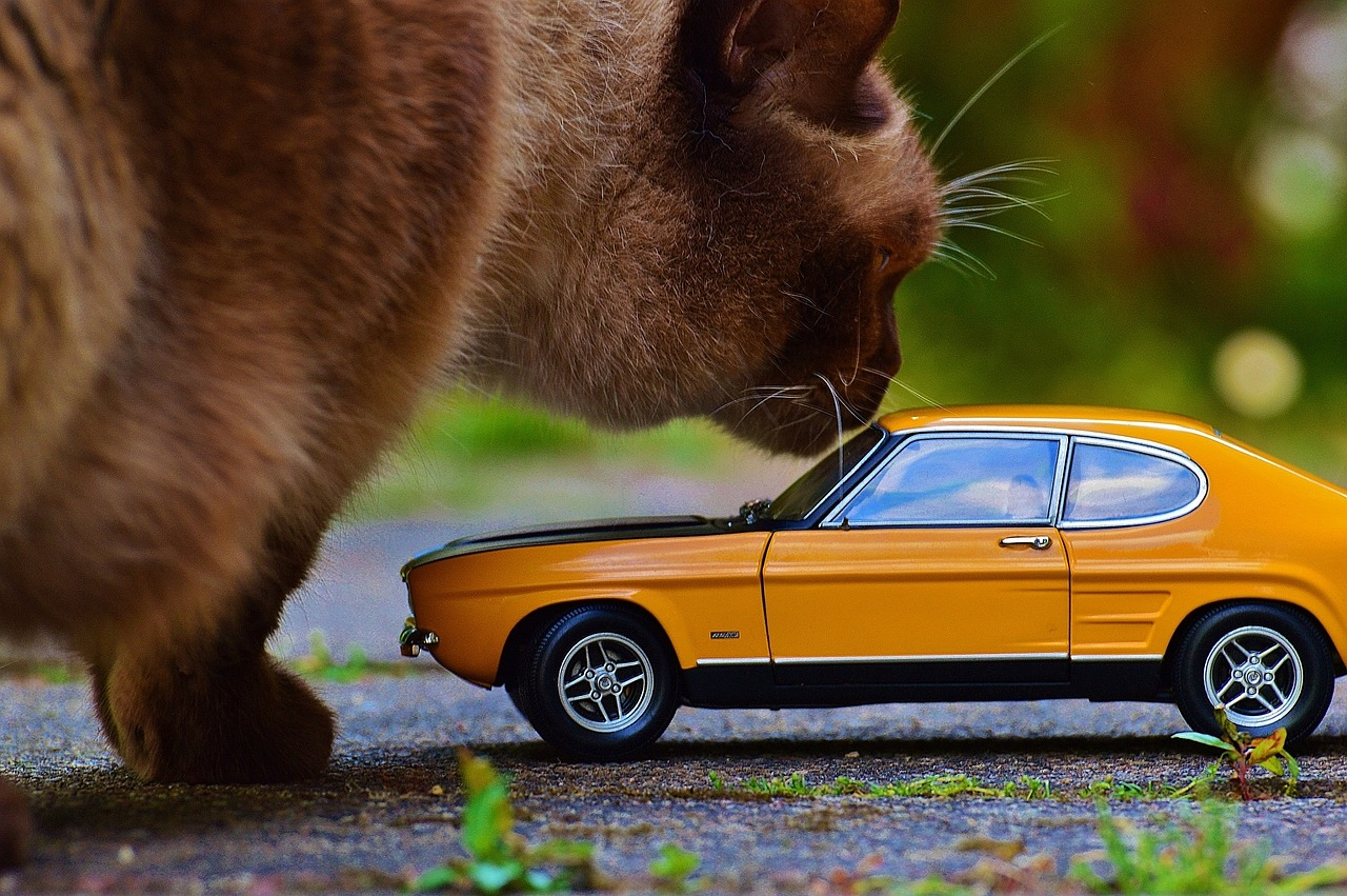 cat with mini car
