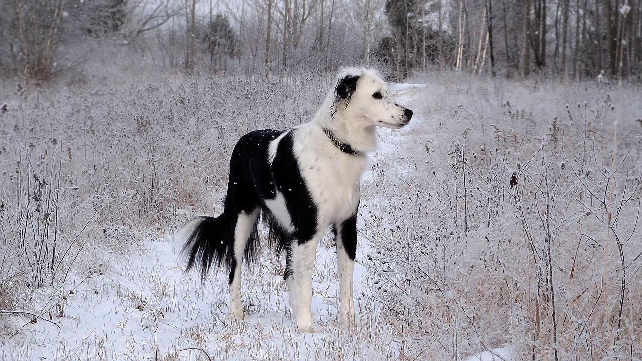 dog on snowy trail