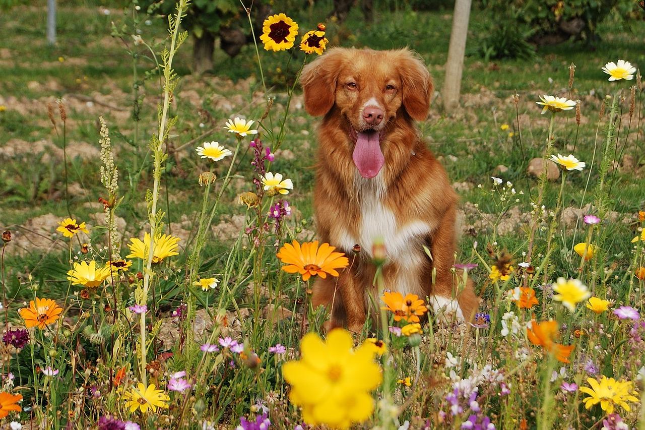 dog wild flowers