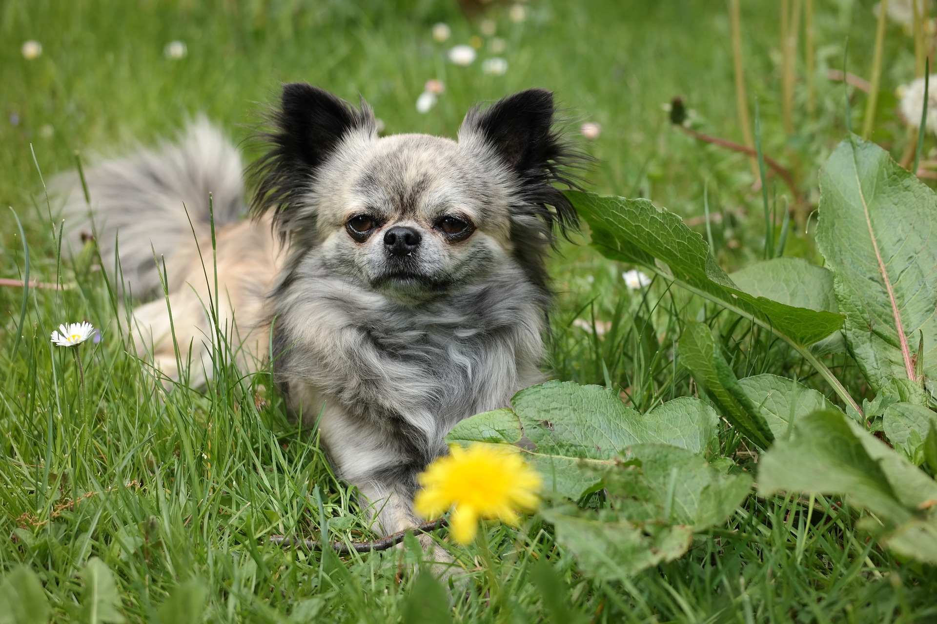 little dog in grass