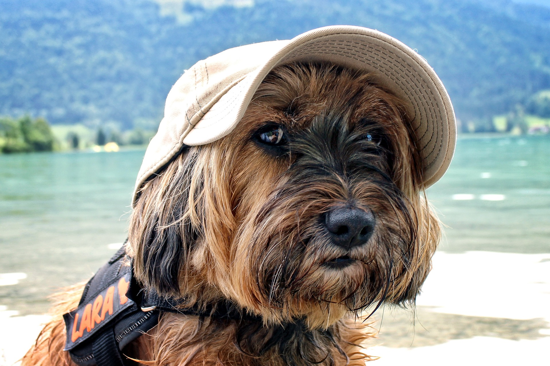 outdoor pup with hat